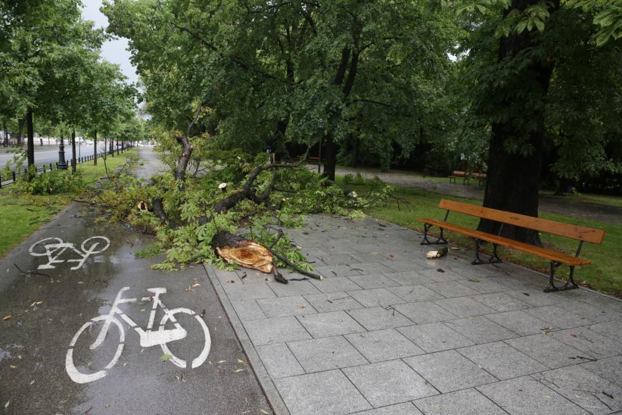 Połamane gałęzie na ścieżce rowerowej