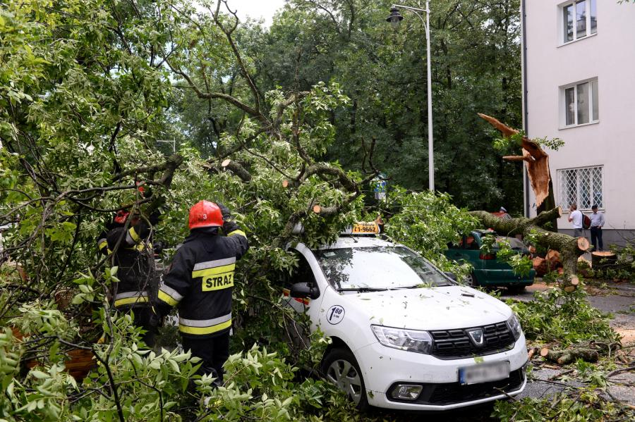 Powalone drzewa w stolicy