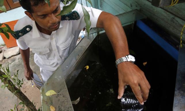 76 tysięcy zarażonych. Największa epidemia dengi od lat