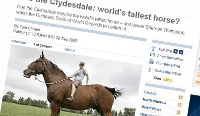 Zobacz największego konia na świecie