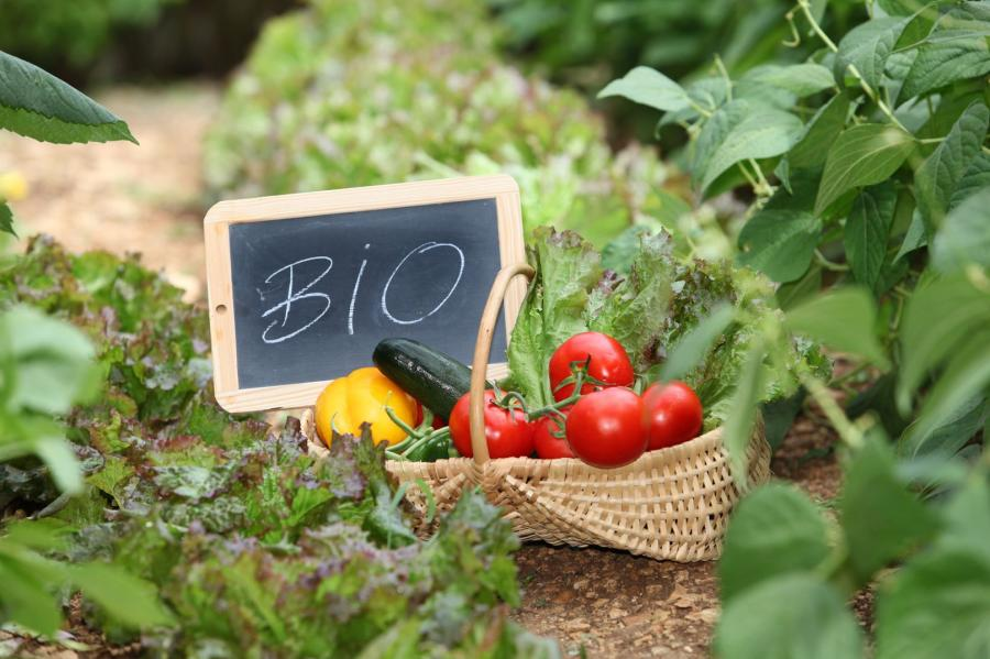 ekologiczna żywność