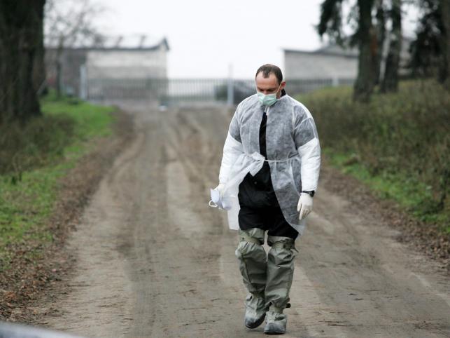 Służby sanitarne wytyczyły tzw. strefę zapowietrzenia, czyli obszar w promieniu kilku kilometrów od wykrytych ognisk zarazy