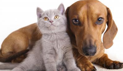 pies kot zwierzę zwierzęta