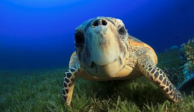 Żółw - zdjęcie ilustracyjne
