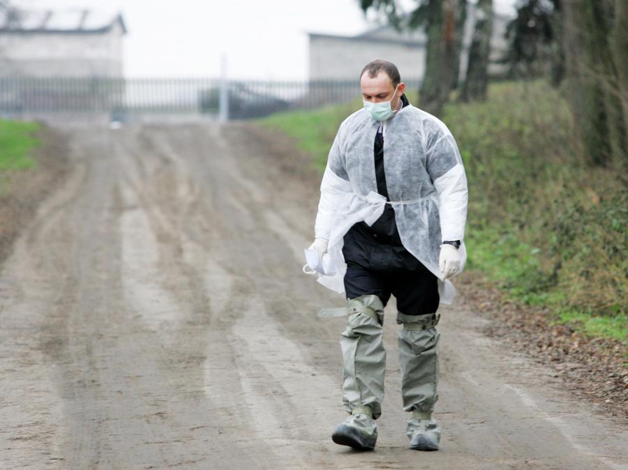 60 osób mogło się zarazić ptasią grypą