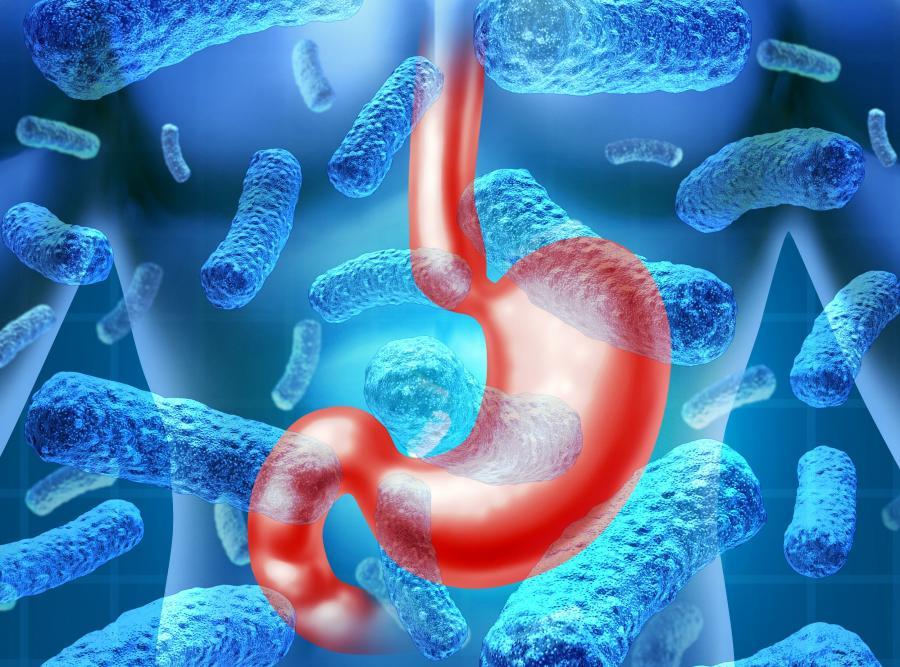 Żołądek i bakterie