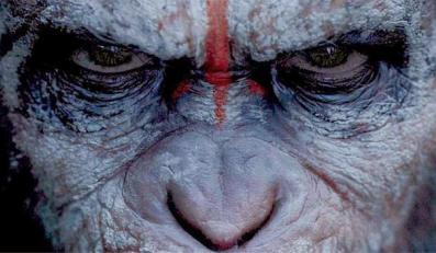 Małpy wciąż rządzą w kinach!
