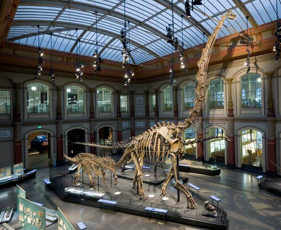 Berlin z dzieckiem - Muzeum Historii Naturalnej